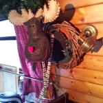 The elk Oscar